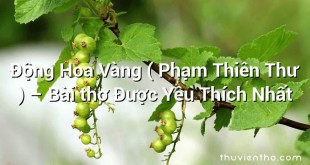 Động Hoa Vàng ( Phạm Thiên Thư ) – Bài thơ Được Yêu Thích Nhất