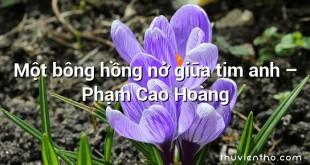 Một bông hồng nở giữa tim anh  –  Phạm Cao Hoàng
