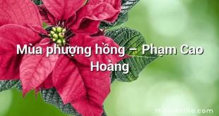 Mùa phượng hồng  –  Phạm Cao Hoàng