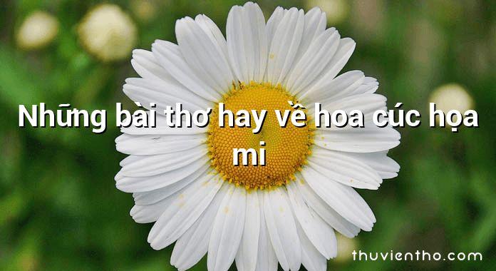 Những bài thơ hay về hoa cúc họa mi