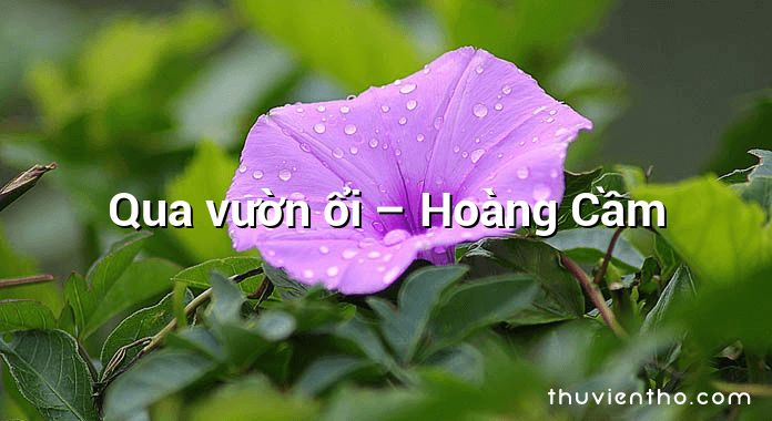 Qua vườn ổi  –  Hoàng Cầm