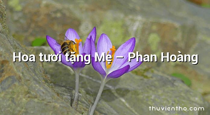 Hoa tươi tặng Mẹ – Phan Hoàng