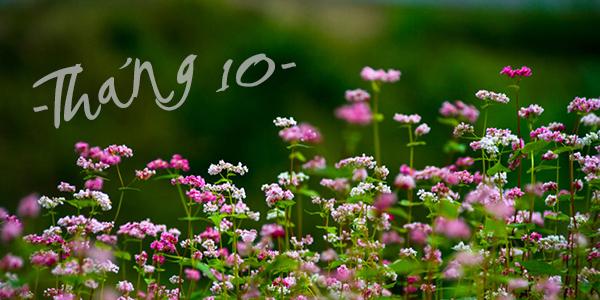 nhung bai tho ngan hay thang 10 cho nhung nguoi lang man 2 - Những bài thơ ngắn hay tháng 10 cho những người lãng mạn