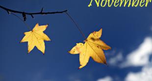 nhung bai tho ngan hay thang 11 y nghia nhat 310x165 - Những bài thơ ngắn hay tháng 11 ý nghĩa nhất