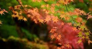 nhung bai tho ngan hay thang 8 cho nguoi dang yeu 310x165 - Những bài thơ ngắn hay tháng 8 cho người đang yêu