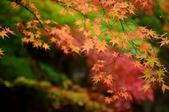 nhung bai tho ngan hay thang 8 cho nguoi dang yeu - Những bài thơ ngắn hay tháng 8 cho người đang yêu
