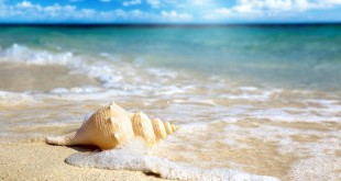 nhung bai tho ngan hay ve bien nhieu nguoi yeu thich 310x165 - Những bài thơ ngắn hay về biển nhiều người yêu thích