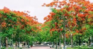 nhung bai tho ngan hay ve hai phong tuyen chon 310x165 - Những bài thơ ngắn hay về Hải Phòng tuyển chọn