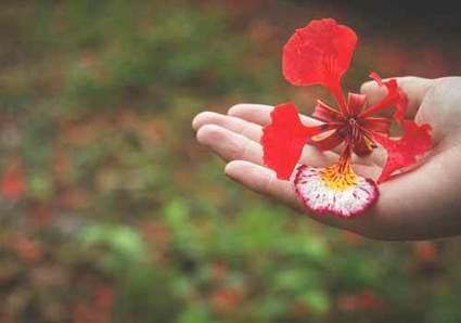 nhung bai tho ngan hay ve hoa dac sac nhat 2 - Những bài thơ ngắn hay về hoa đặc sắc nhất