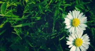 nhung bai tho ngan hay ve hoa dac sac nhat 310x165 - Những bài thơ ngắn hay về hoa đặc sắc nhất