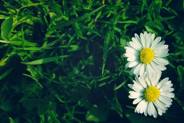 nhung bai tho ngan hay ve hoa dac sac nhat - Những bài thơ ngắn hay về hoa đặc sắc nhất