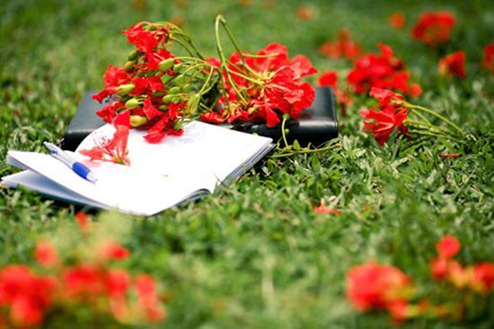 nhung bai tho ngan hay ve hoa phuong danh tang tuoi hoc tro 1 - Những bài thơ ngắn hay về hoa phượng dành tặng tuổi học trò