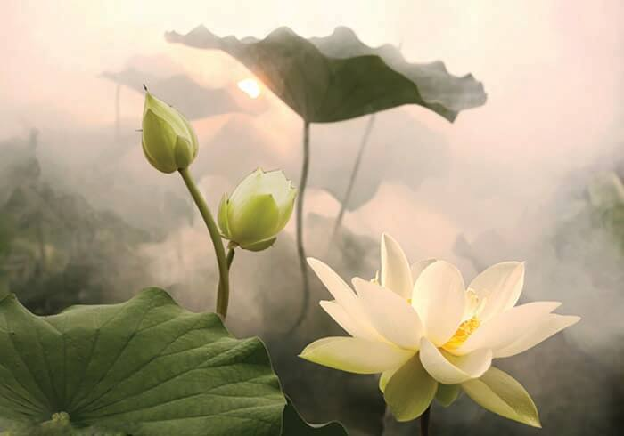 nhung bai tho ngan hay ve hoa sen y nghia nhat 1 - Những bài thơ ngắn hay về hoa sen ý nghĩa nhất