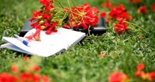 nhung bai tho ngan hay ve mua he moi nhat 310x165 - Những bài thơ ngắn hay về mùa hè mới nhất