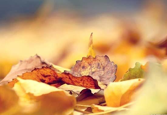 nhung bai tho ngan hay ve mua thu moi nhat 2 - Những bài thơ ngắn hay về mùa thu mới nhất