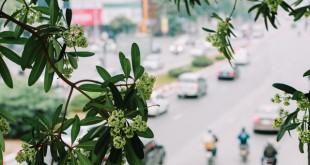 nhung bai tho ngan hay ve mua thu moi nhat 310x165 - Những bài thơ ngắn hay về mùa thu mới nhất