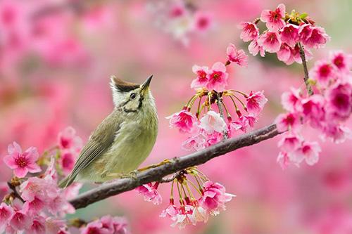 nhung bai tho ngan hay ve mua xuan bat hu 1 - Những bài thơ ngắn hay về mùa xuân bất hủ