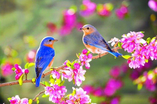 nhung bai tho ngan hay ve mua xuan bat hu 2 - Những bài thơ ngắn hay về mùa xuân bất hủ