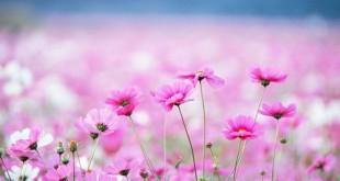 nhung bai tho ngan hay ve mua xuan bat hu 310x165 - Những bài thơ ngắn hay về mùa xuân bất hủ
