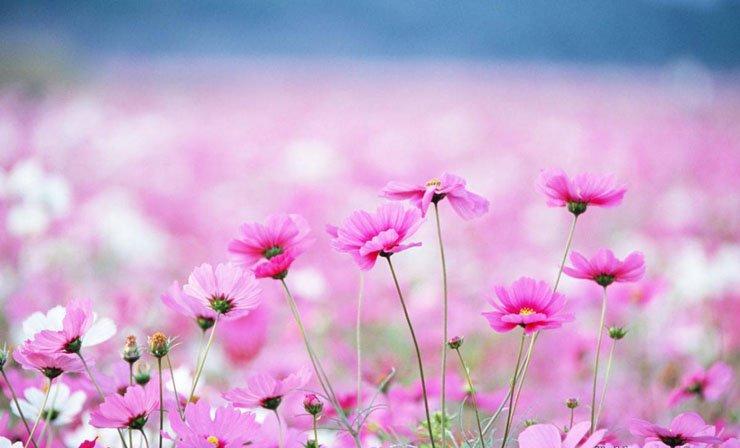 nhung bai tho ngan hay ve mua xuan bat hu - Những bài thơ ngắn hay về mùa xuân bất hủ