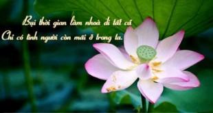 nhung bai tho ngan hay ve phat sau sac nhat 310x165 - Những bài thơ ngắn hay về Phật sâu sắc nhất