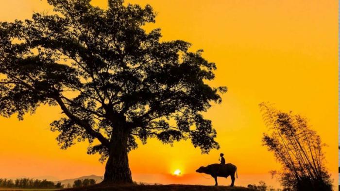 top 10 bai tho hay cua nha tho hoang trung thong 5 - Top 10 Bài thơ hay của nhà thơ Hoàng Trung Thông