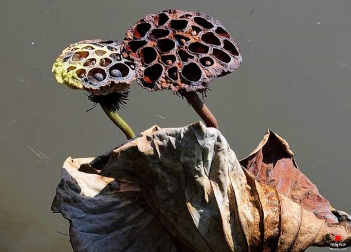top 10 bai tho hay viet cho mua la rung 7 - Top 10 Bài thơ hay viết cho mùa lá rụng