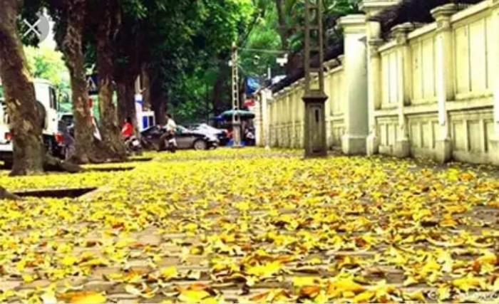 top 10 bai tho hay viet cho mua la rung 9 - Top 10 Bài thơ hay viết cho mùa lá rụng