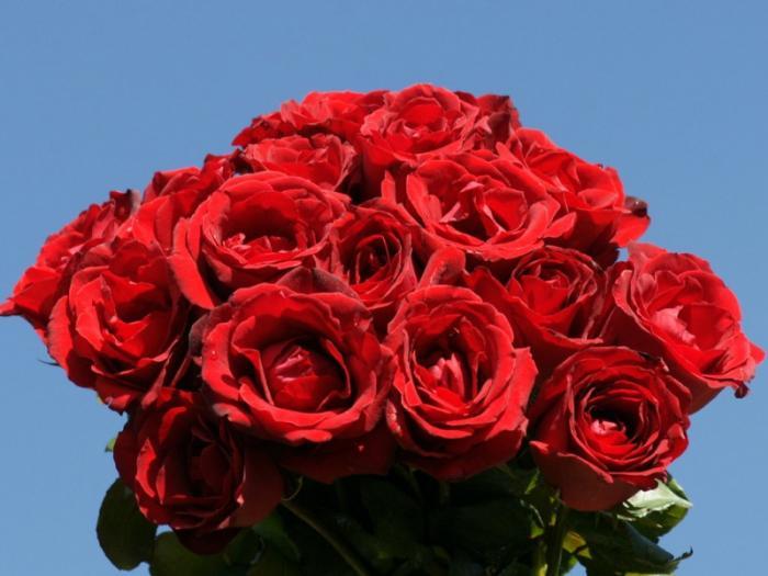 top 10 bai tho tang thay co giao nhan ngay 2011 hay va y nghia nhat 6 - Top 10 Bài thơ tặng thầy cô giáo nhân ngày 20/11 hay và ý nghĩa nhất