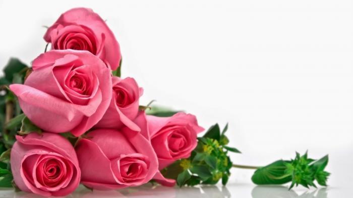 top 12 bai tho hay ve hoa hong 3 - Top 12 Bài thơ hay về hoa hồng