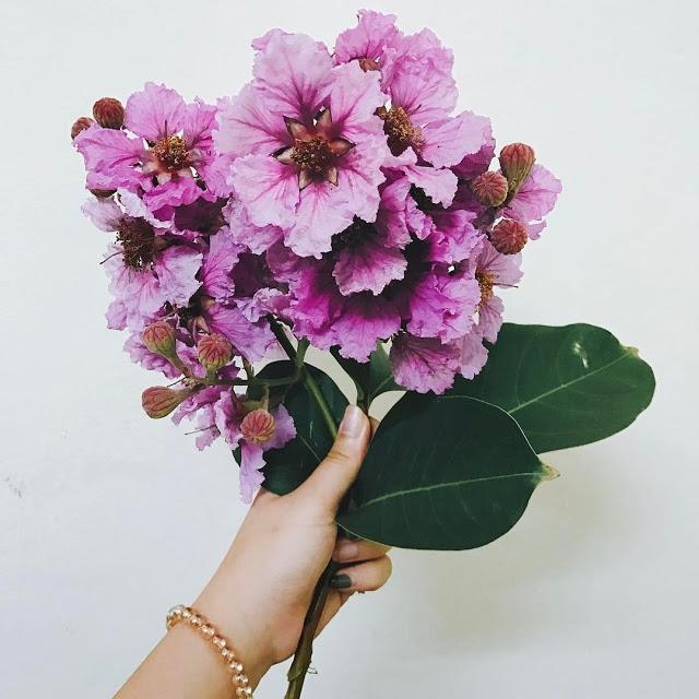 top 13 bai tho hay nhat ve hoa bang lang 17 - Top 13 Bài thơ hay nhất về hoa bằng lăng