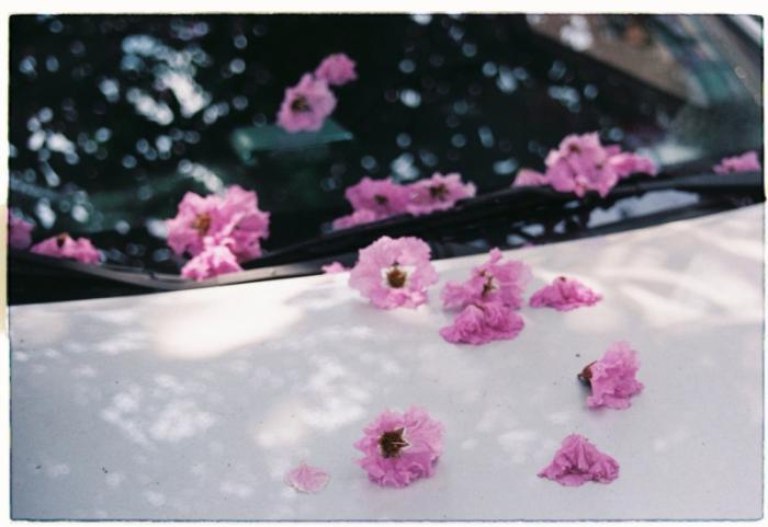 top 13 bai tho hay nhat ve hoa bang lang 21 - Top 13 Bài thơ hay nhất về hoa bằng lăng