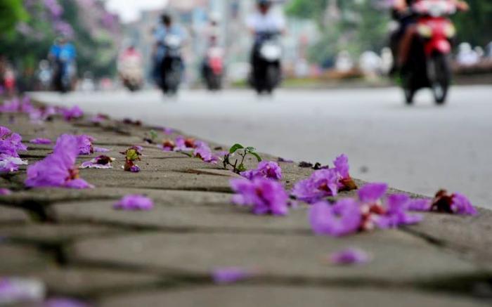 top 13 bai tho hay nhat ve hoa bang lang 25 - Top 13 Bài thơ hay nhất về hoa bằng lăng