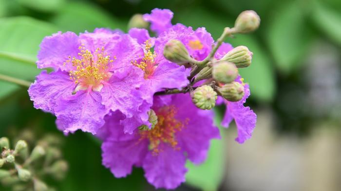 top 13 bai tho hay nhat ve hoa bang lang 26 - Top 13 Bài thơ hay nhất về hoa bằng lăng