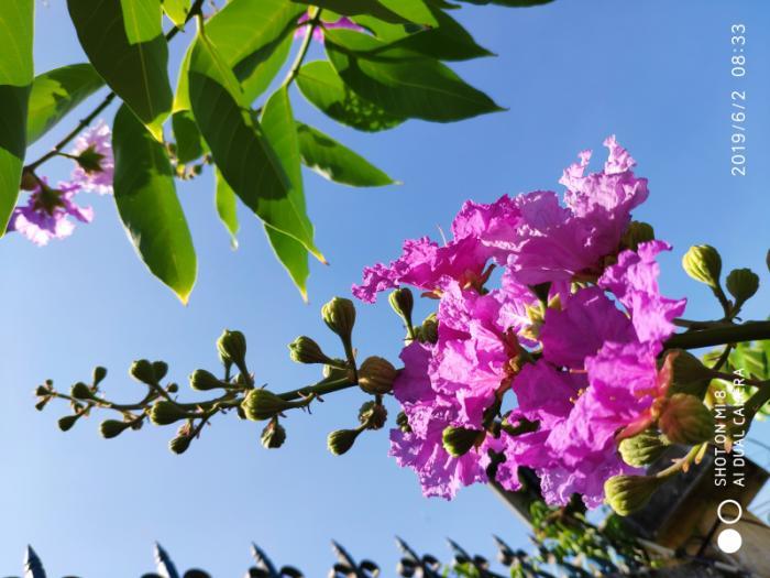 top 13 bai tho hay nhat ve hoa bang lang 28 - Top 13 Bài thơ hay nhất về hoa bằng lăng