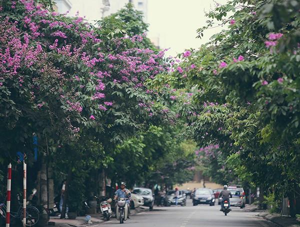 top 13 bai tho hay nhat ve hoa bang lang 33 - Top 13 Bài thơ hay nhất về hoa bằng lăng