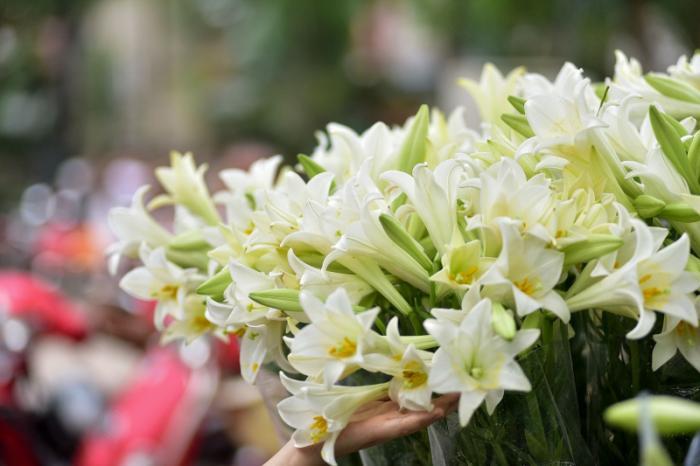 top 15 bai tho hay ve hoa loa ken thang tu 10 - Top 15 Bài thơ hay về hoa loa kèn tháng tư
