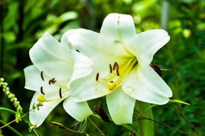 top 15 bai tho hay ve hoa loa ken thang tu 12 - Top 15 Bài thơ hay về hoa loa kèn tháng tư