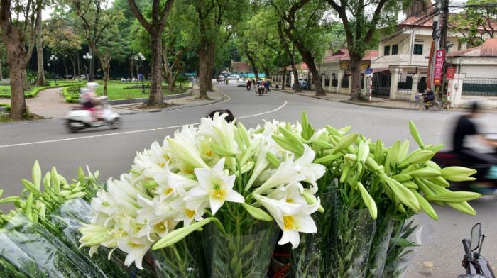 top 15 bai tho hay ve hoa loa ken thang tu 8 - Top 15 Bài thơ hay về hoa loa kèn tháng tư