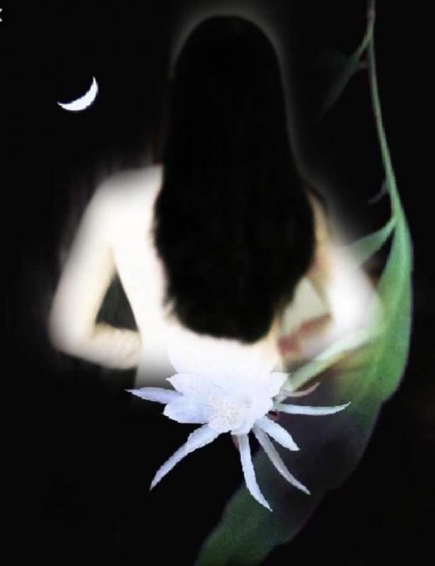 top 15 bai tho hay ve hoa quynh 1 - Top 15 Bài thơ hay về hoa Quỳnh