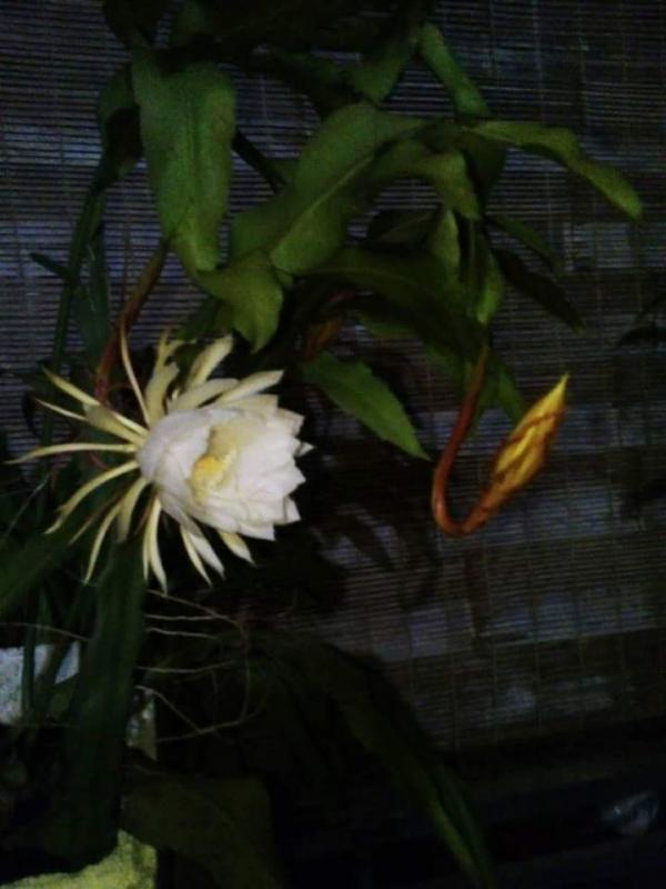 top 15 bai tho hay ve hoa quynh 11 - Top 15 Bài thơ hay về hoa Quỳnh