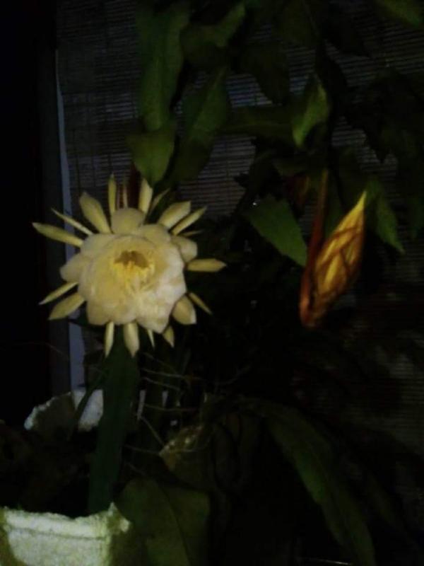 top 15 bai tho hay ve hoa quynh 14 - Top 15 Bài thơ hay về hoa Quỳnh