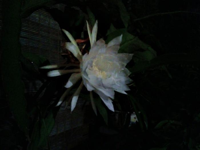 top 15 bai tho hay ve hoa quynh 5 - Top 15 Bài thơ hay về hoa Quỳnh