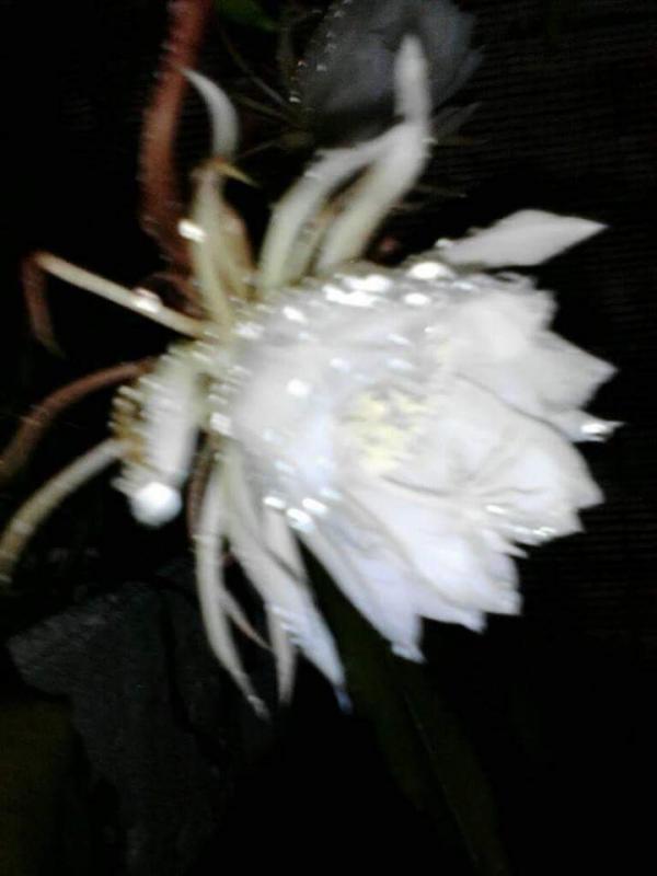 top 15 bai tho hay ve hoa quynh 9 - Top 15 Bài thơ hay về hoa Quỳnh