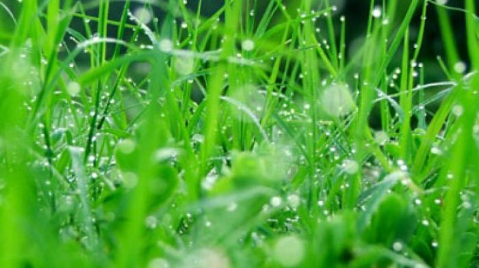 top 15 bai tho hay ve mua xuan 11 - Top 15 Bài thơ hay về mưa xuân