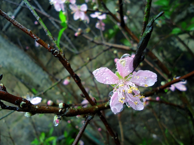 top 15 bai tho hay ve mua xuan 13 - Top 15 Bài thơ hay về mưa xuân