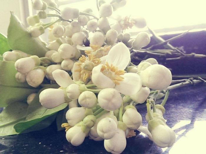 top 15 bai tho hay viet ve hoa buoi 12 - Top 15 Bài thơ hay viết về hoa bưởi