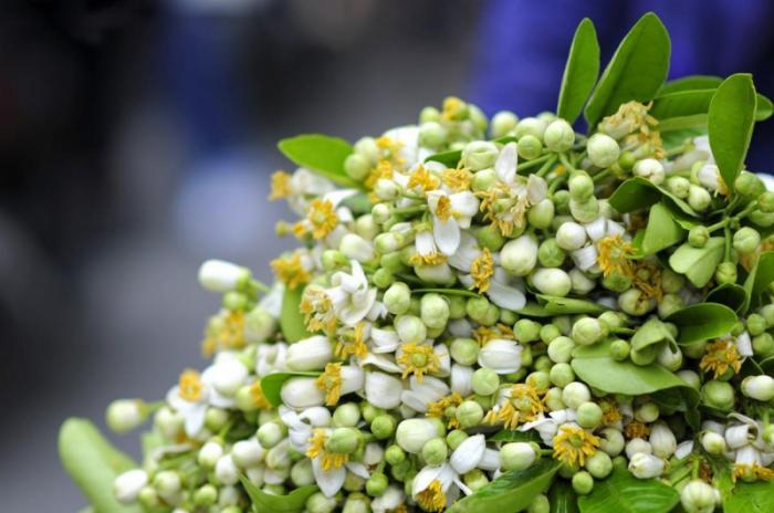 top 15 bai tho hay viet ve hoa buoi 5 - Top 15 Bài thơ hay viết về hoa bưởi