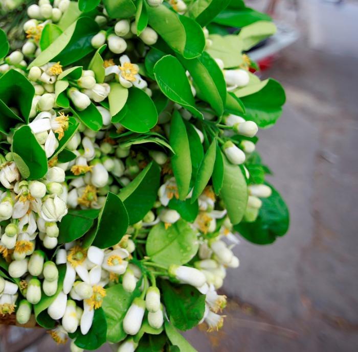 top 15 bai tho hay viet ve hoa buoi 6 - Top 15 Bài thơ hay viết về hoa bưởi