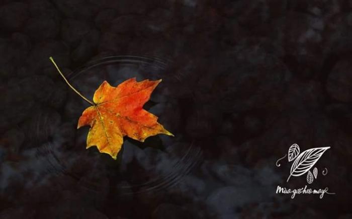 top 18 bai tho hay viet ve mua gio heo may 3 - Top 18 Bài thơ hay viết về mùa gió heo may